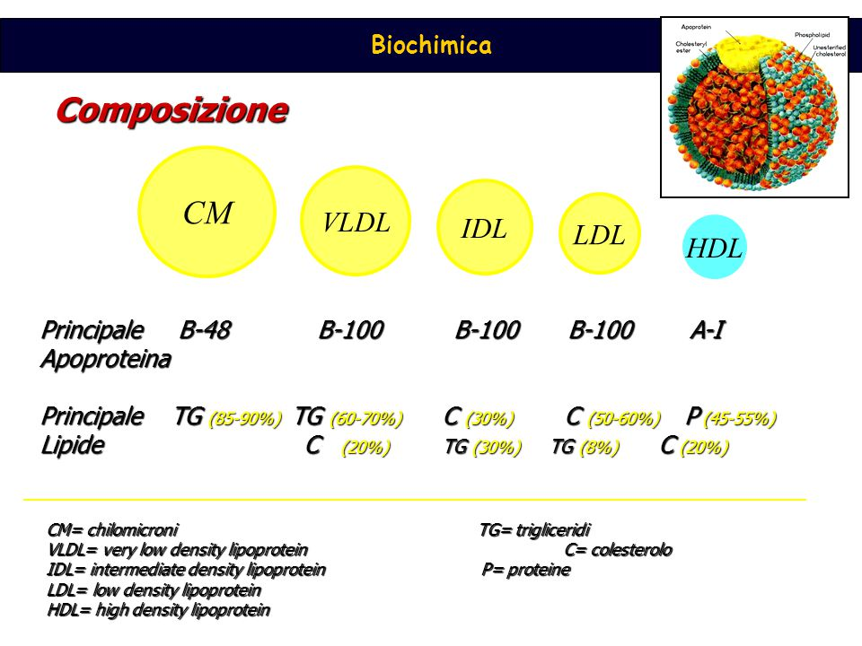VLDL IDL LDL HDL Principale B-48 B-100 B-100 B-100 A-I Apoproteina Principale TG (85-90%) TG (60-70%) C (30%) C (50-60%) P (45-55%) Lipide C (20%) TG (30%) TG (8%) C (20%) Composizione CM= chilomicroniTG= trigliceridi VLDL= very low density lipoproteinC= colesterolo IDL= intermediate density lipoprotein P= proteine LDL= low density lipoprotein HDL= high density lipoprotein CM