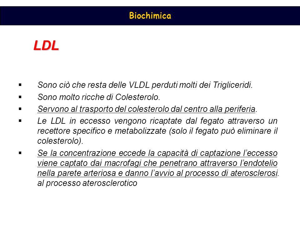 Biochimica LDL  Sono ciò che resta delle VLDL perduti molti dei Trigliceridi.