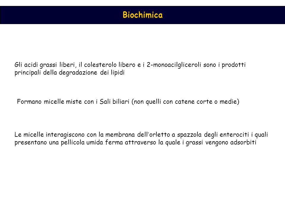 Attivazione dell ' acido grasso nel citosol ad opera della acil CoA sintetasi