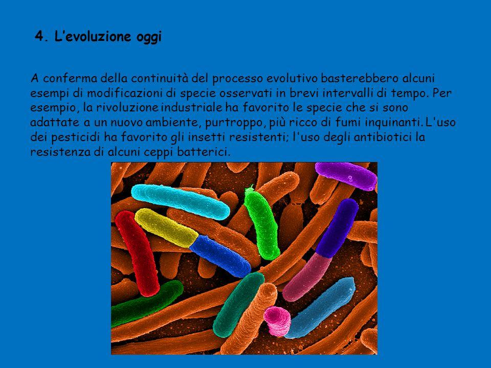 4. L'evoluzione oggi A conferma della continuità del processo evolutivo basterebbero alcuni esempi di modificazioni di specie osservati in brevi inter