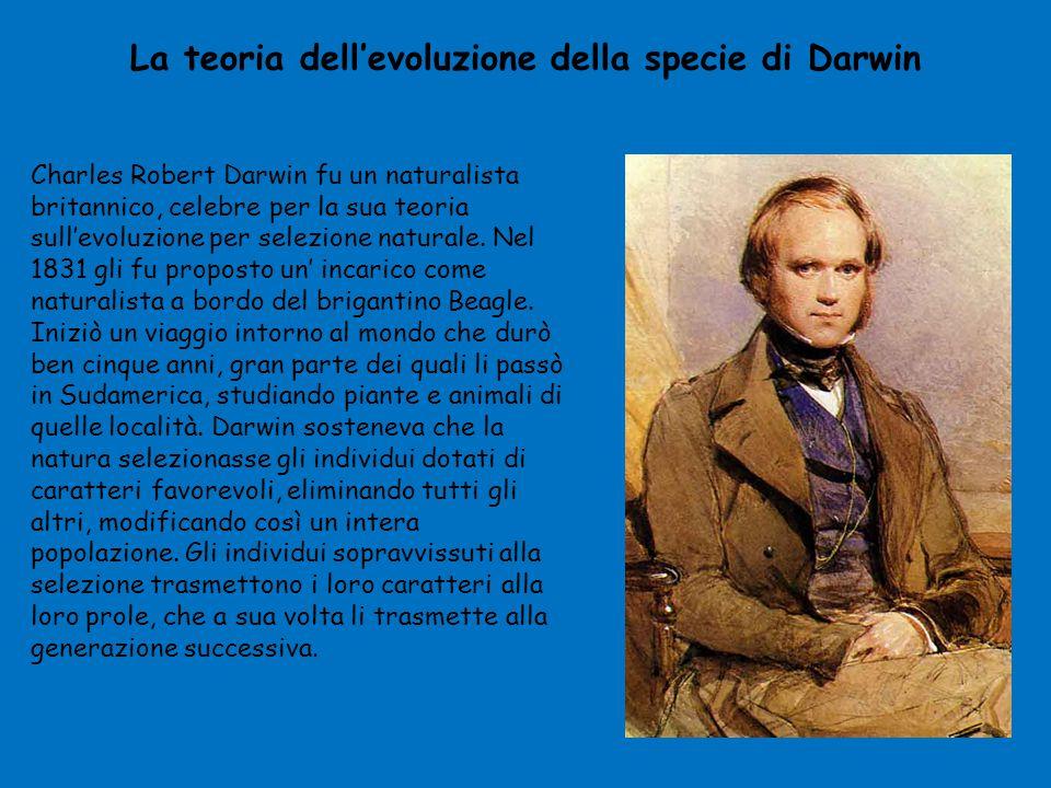 La teoria dell'evoluzione della specie di Darwin Charles Robert Darwin fu un naturalista britannico, celebre per la sua teoria sull'evoluzione per sel