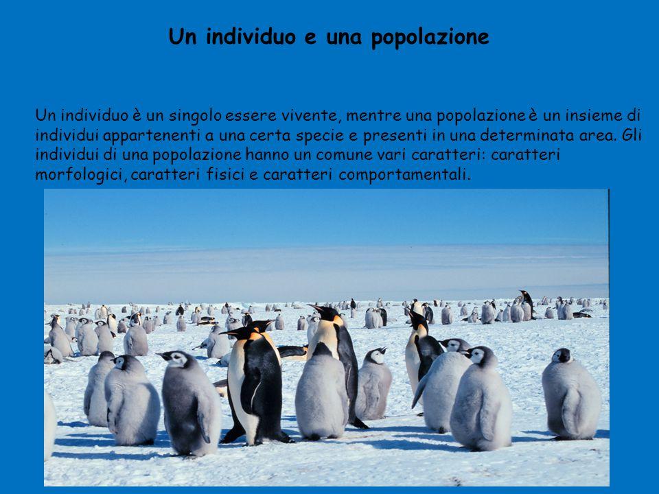 Un individuo e una popolazione Un individuo è un singolo essere vivente, mentre una popolazione è un insieme di individui appartenenti a una certa spe