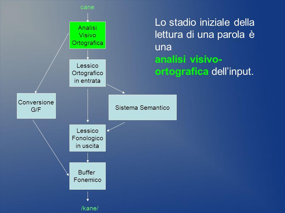 Sistema Semantico Lessico Ortografico in entrata Conversione G/F cane /kane/ Lessico Fonologico in uscita Buffer Fonemico Analisi Visivo Ortografica L