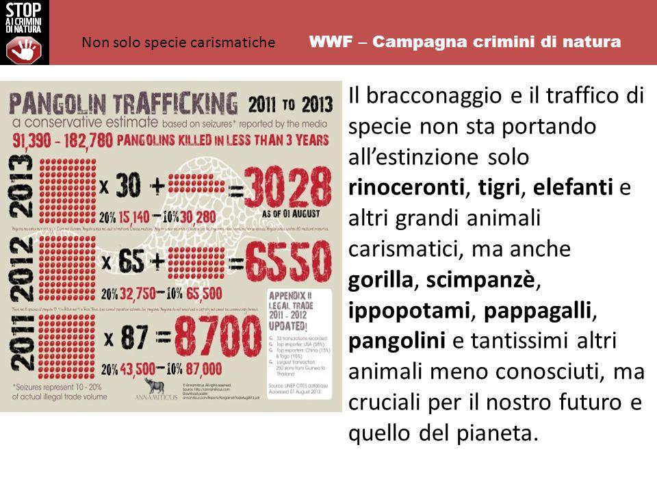 WWF – Campagna crimini di natura Il bracconaggio e il traffico di specie non sta portando all'estinzione solo rinoceronti, tigri, elefanti e altri grandi animali carismatici, ma anche gorilla, scimpanzè, ippopotami, pappagalli, pangolini e tantissimi altri animali meno conosciuti, ma cruciali per il nostro futuro e quello del pianeta.