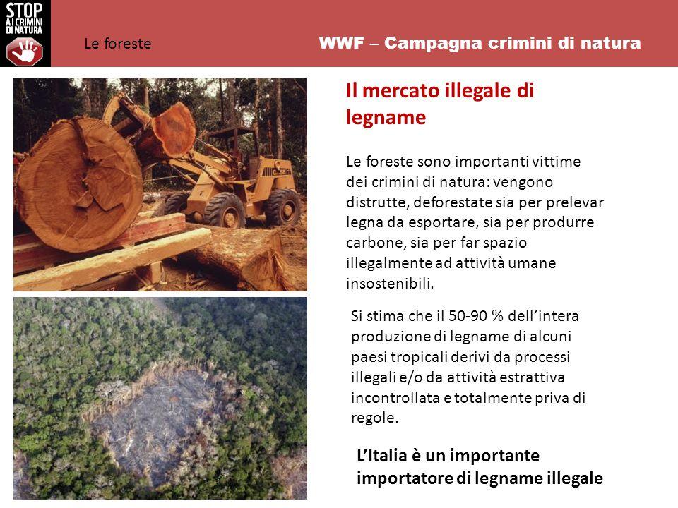 WWF – Campagna crimini di natura Il mercato illegale di legname Le foreste sono importanti vittime dei crimini di natura: vengono distrutte, deforestate sia per prelevar legna da esportare, sia per produrre carbone, sia per far spazio illegalmente ad attività umane insostenibili.