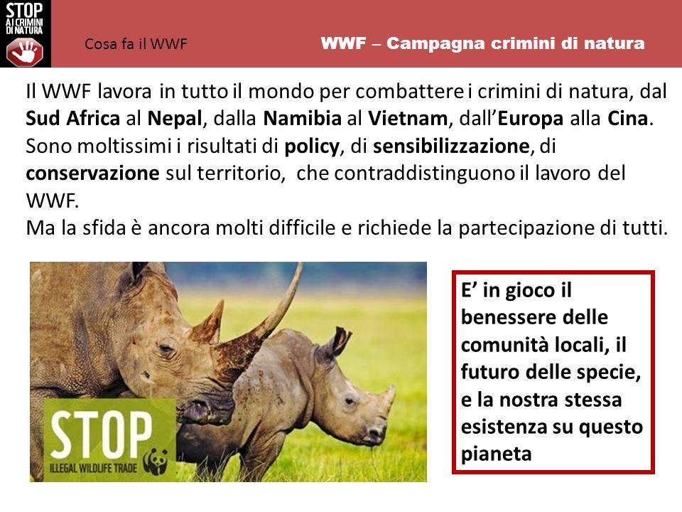 WWF – Campagna crimini di natura Il WWF lavora in tutto il mondo per combattere i crimini di natura, dal Sud Africa al Nepal, dalla Namibia al Vietnam, dall'Europa alla Cina.