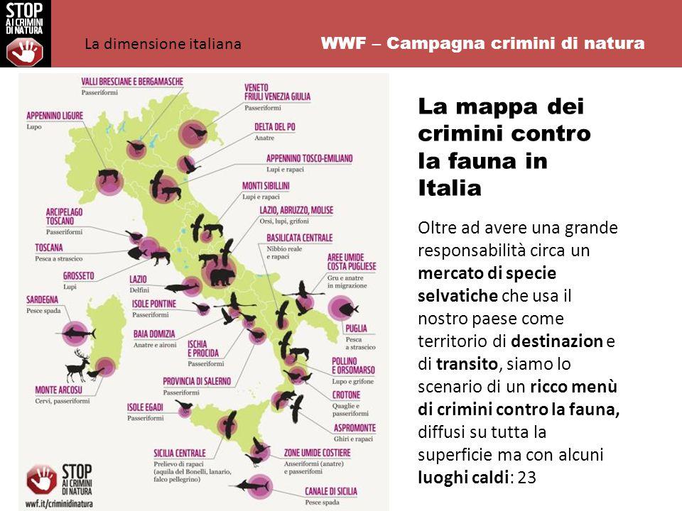 WWF – Campagna crimini di natura La mappa dei crimini contro la fauna in Italia Oltre ad avere una grande responsabilità circa un mercato di specie selvatiche che usa il nostro paese come territorio di destinazion e di transito, siamo lo scenario di un ricco menù di crimini contro la fauna, diffusi su tutta la superficie ma con alcuni luoghi caldi: 23 La dimensione italiana