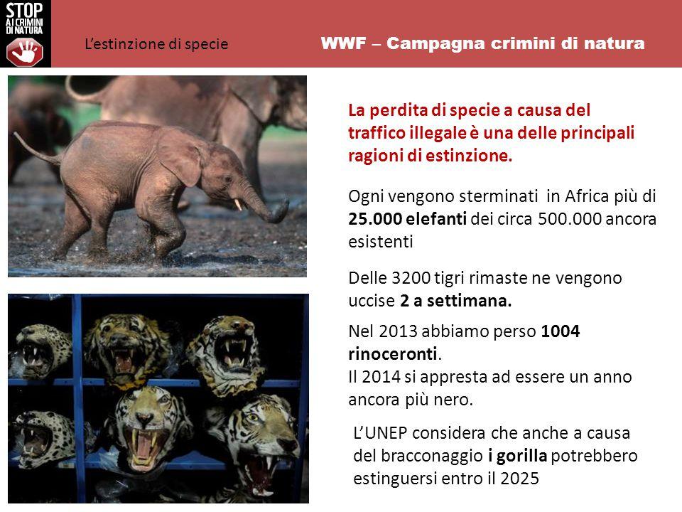 WWF – Campagna crimini di natura Ogni vengono sterminati in Africa più di 25.000 elefanti dei circa 500.000 ancora esistenti Delle 3200 tigri rimaste ne vengono uccise 2 a settimana.