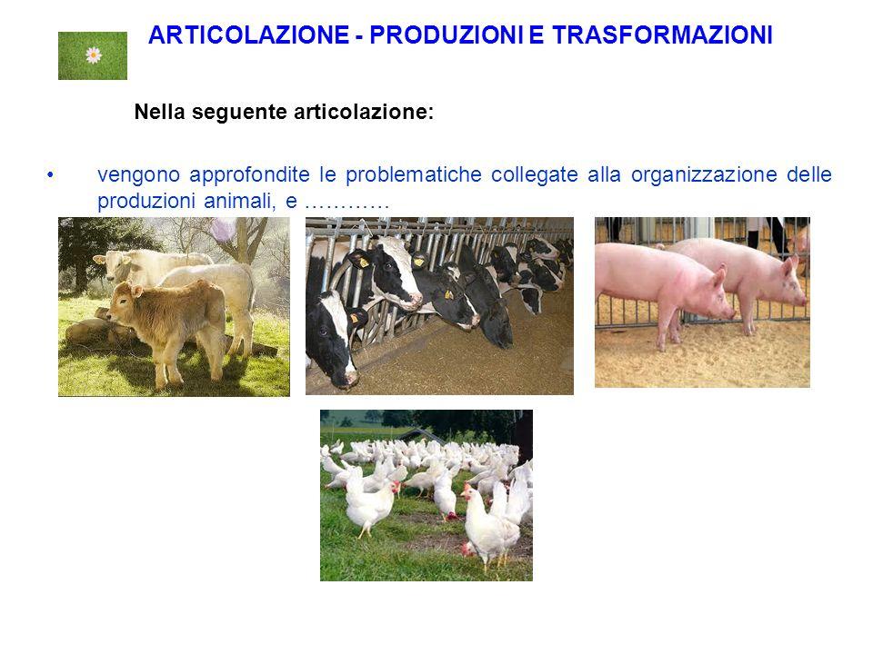 ARTICOLAZIONE - PRODUZIONI E TRASFORMAZIONI Nella seguente articolazione: vengono approfondite le problematiche collegate alla organizzazione delle produzioni animali, e …………