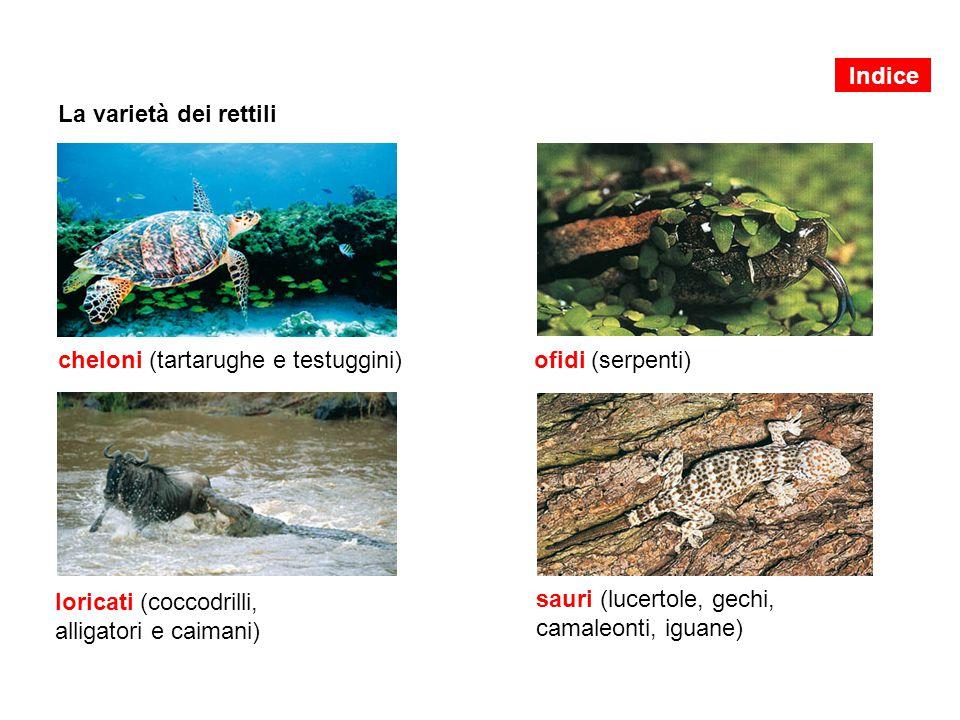 La varietà dei rettili cheloni (tartarughe e testuggini) loricati (coccodrilli, alligatori e caimani) ofidi (serpenti) sauri (lucertole, gechi, camale