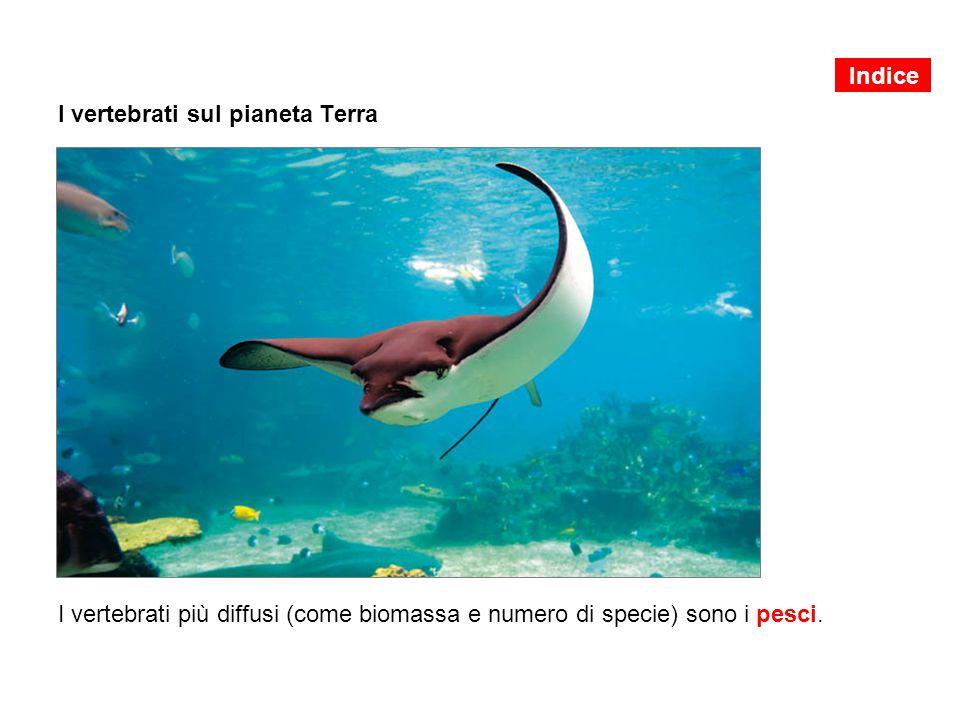 I vertebrati sul pianeta Terra I vertebrati più diffusi (come biomassa e numero di specie) sono i pesci. Indice