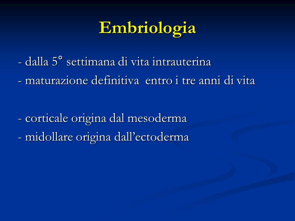 Embriologia - dalla 5° settimana di vita intrauterina - maturazione definitiva entro i tre anni di vita - corticale origina dal mesoderma - midollare origina dall'ectoderma