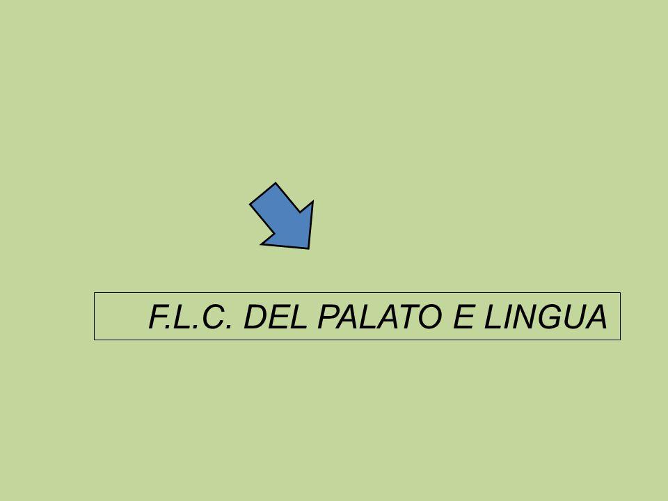 F.L.C. DEL PALATO E LINGUA