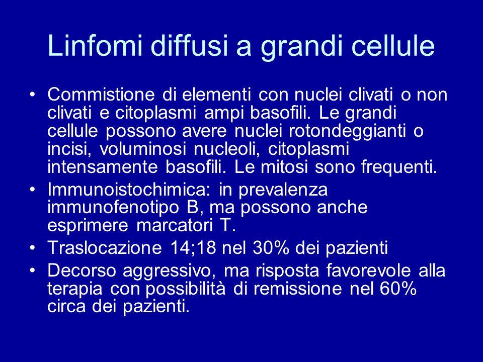 Linfomi diffusi a grandi cellule Commistione di elementi con nuclei clivati o non clivati e citoplasmi ampi basofili. Le grandi cellule possono avere