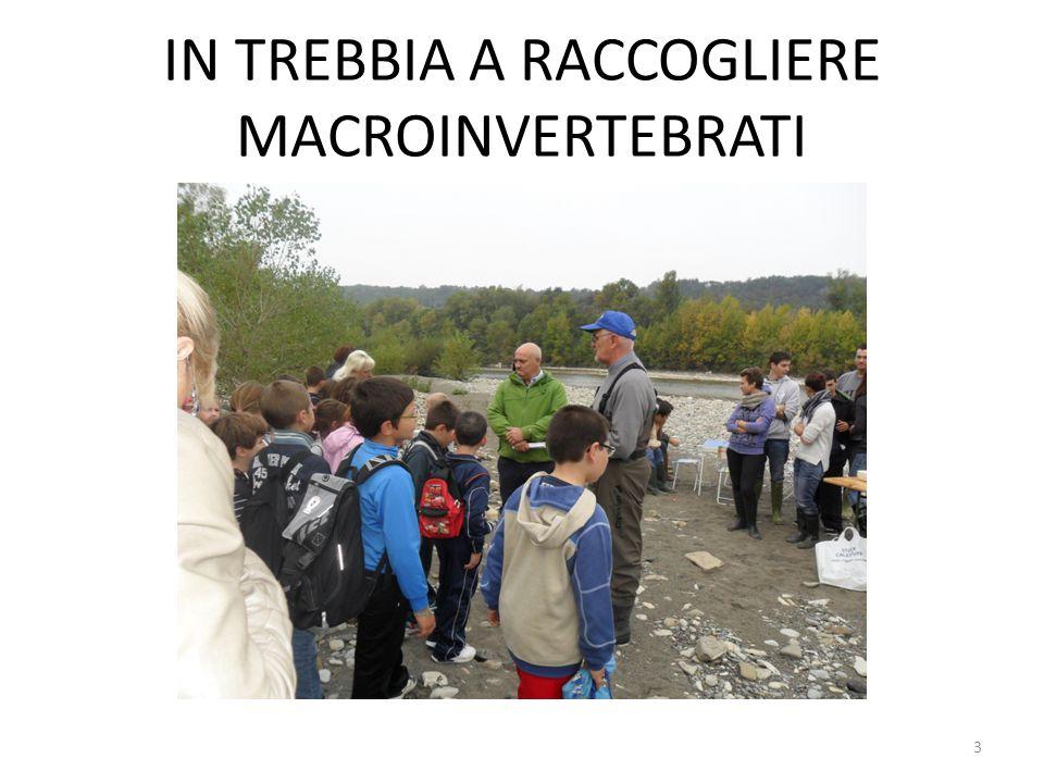IN TREBBIA A RACCOGLIERE MACROINVERTEBRATI 3