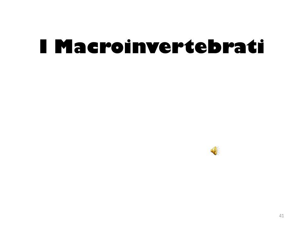 I Macroinvertebrati 41