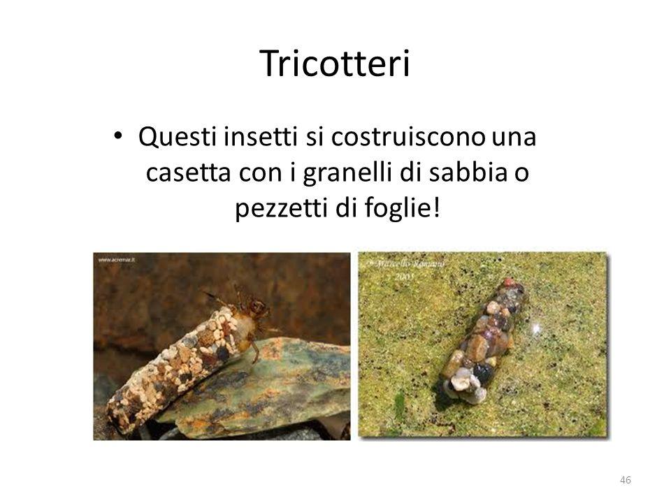 Tricotteri Questi insetti si costruiscono una casetta con i granelli di sabbia o pezzetti di foglie! 46