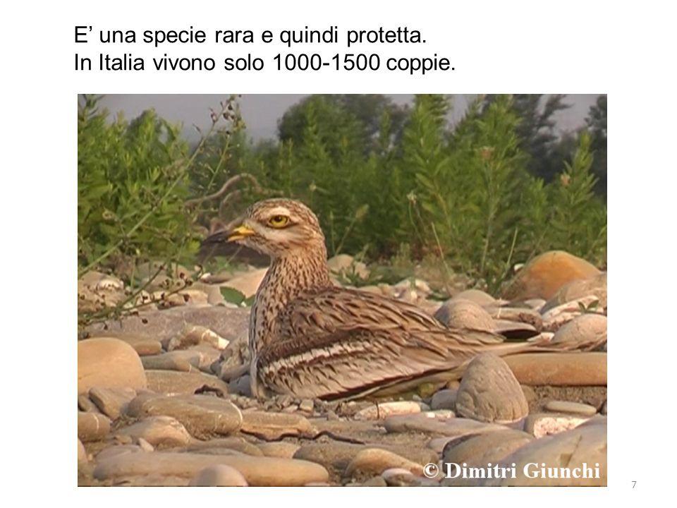 LA ROVERELLA la Roverella è la specie di quercia più diffusa in Italia.