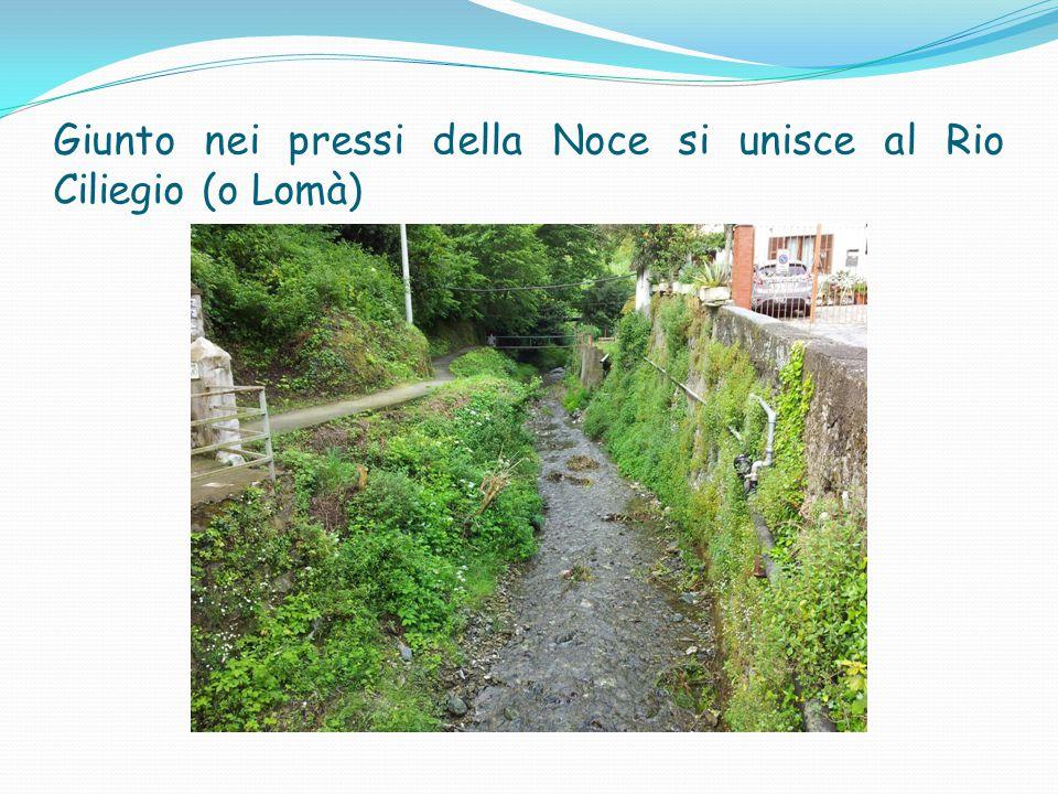 Giunto nei pressi della Noce si unisce al Rio Ciliegio (o Lomà)