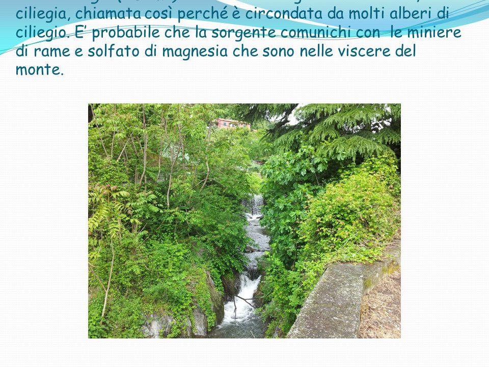 I Il Rio Ciliegio (o Lomà) nasce dalla sorgente della Sexa, o ciliegia, chiamata così perché è circondata da molti alberi di ciliegio.