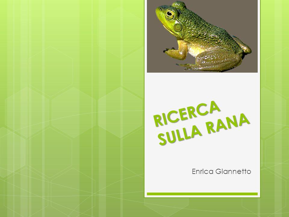RICERCA SULLA RANA Enrica Giannetto