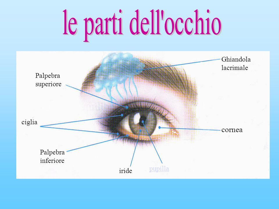 Palpebra superiore Ghiandola lacrimale ciglia Palpebra inferiore iride pupilla cornea