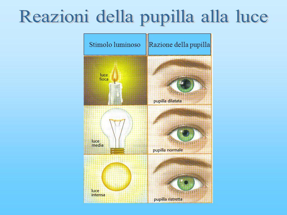 Stimolo luminosoRazione della pupilla