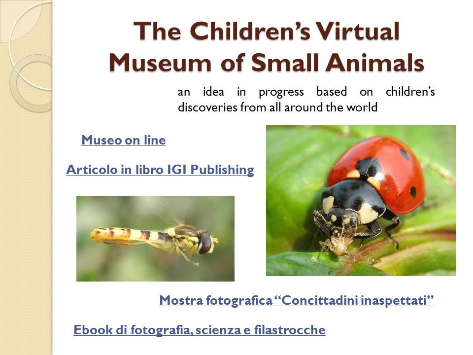 The Children's Virtual Museum of Small Animals an idea in progress based on children's discoveries from all around the world Museo on line Articolo in