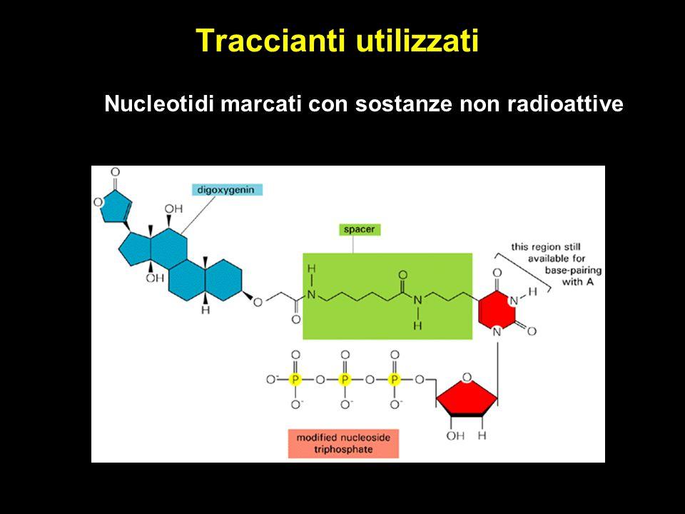 Traccianti utilizzati Nucleotidi marcati con sostanze non radioattive