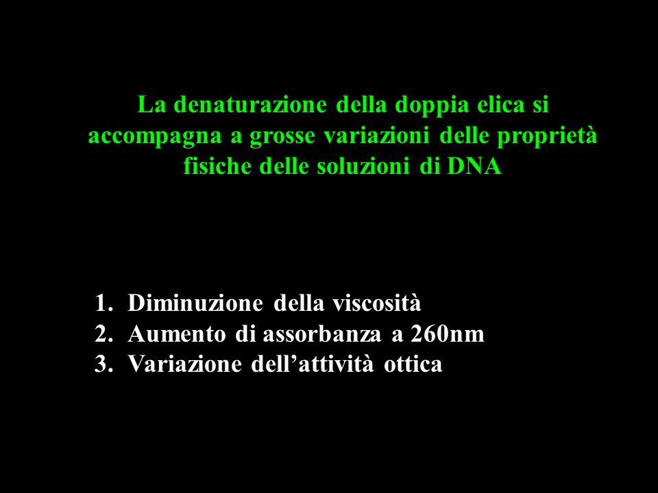 La denaturazione della doppia elica si accompagna a grosse variazioni delle proprietà fisiche delle soluzioni di DNA 1.Diminuzione della viscosità 2.Aumento di assorbanza a 260nm 3.Variazione dell'attività ottica