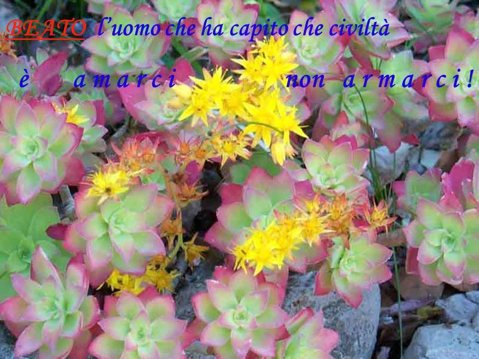 BEATO l'uomo che ha capito che civiltà è a m a r c i non a r m a r c i !