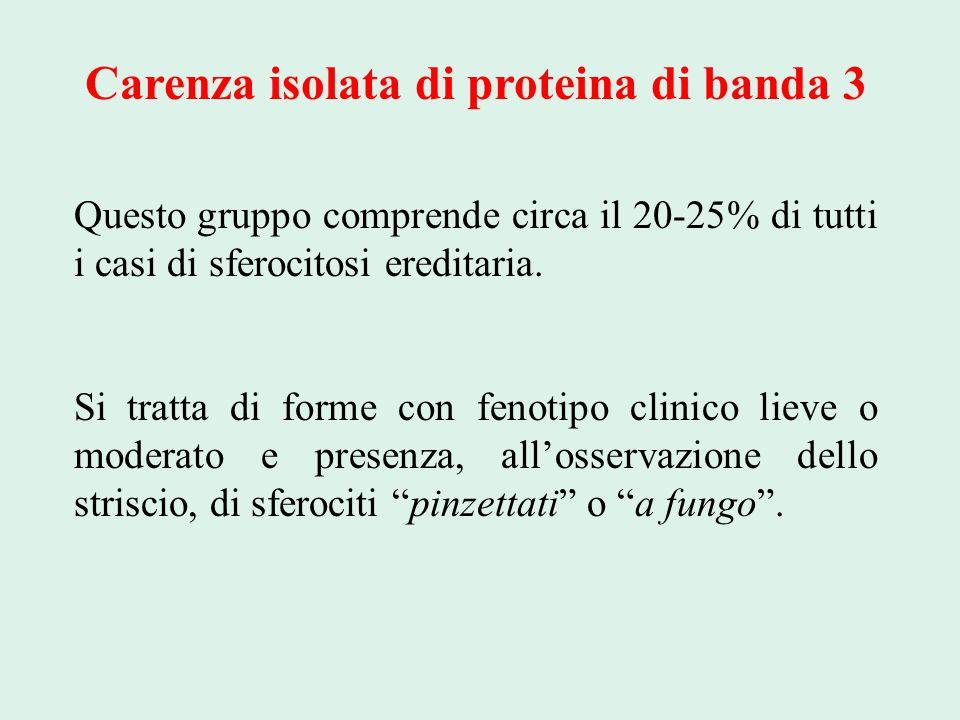 Carenza isolata di proteina di banda 3 Questo gruppo comprende circa il 20-25% di tutti i casi di sferocitosi ereditaria. Si tratta di forme con fenot