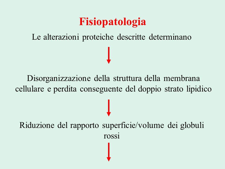 Fisiopatologia Le alterazioni proteiche descritte determinano Disorganizzazione della struttura della membrana cellulare e perdita conseguente del dop