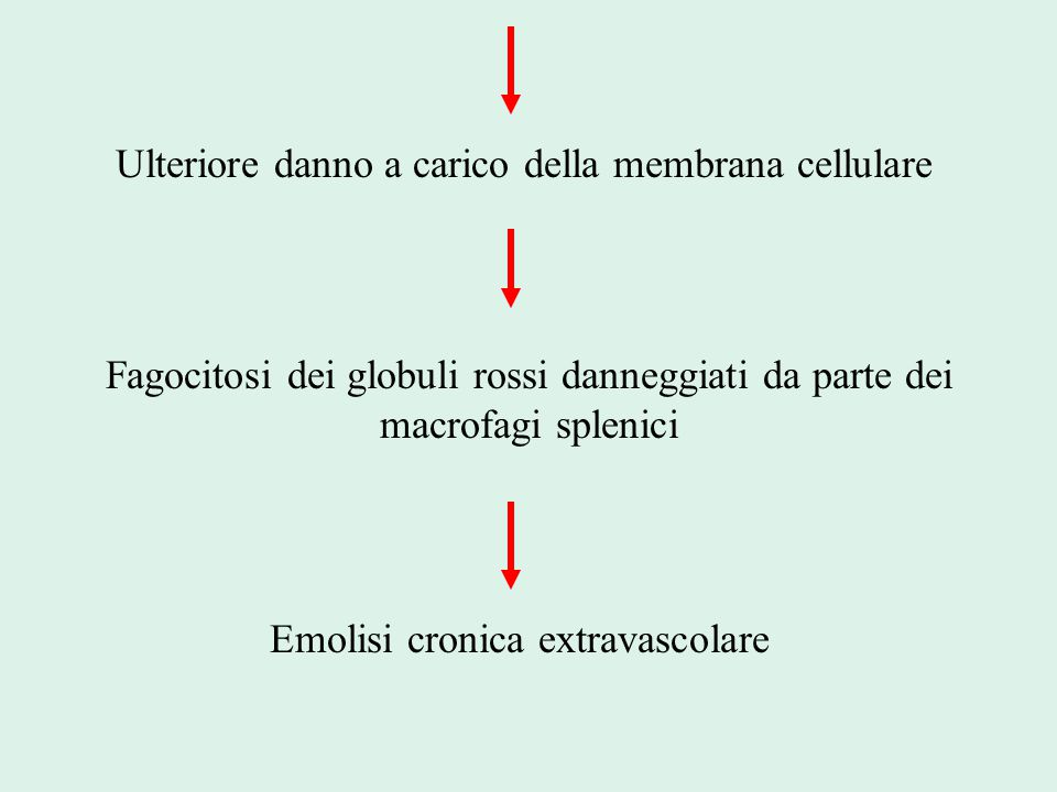 Ulteriore danno a carico della membrana cellulare Fagocitosi dei globuli rossi danneggiati da parte dei macrofagi splenici Emolisi cronica extravascol