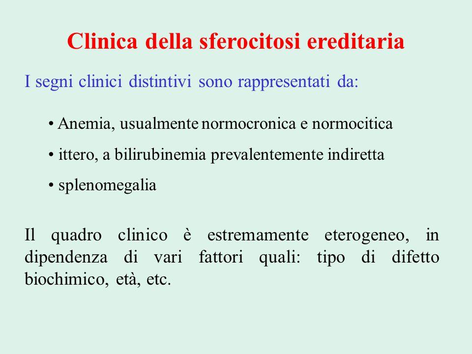 Clinica della sferocitosi ereditaria I segni clinici distintivi sono rappresentati da: Anemia, usualmente normocronica e normocitica ittero, a bilirub