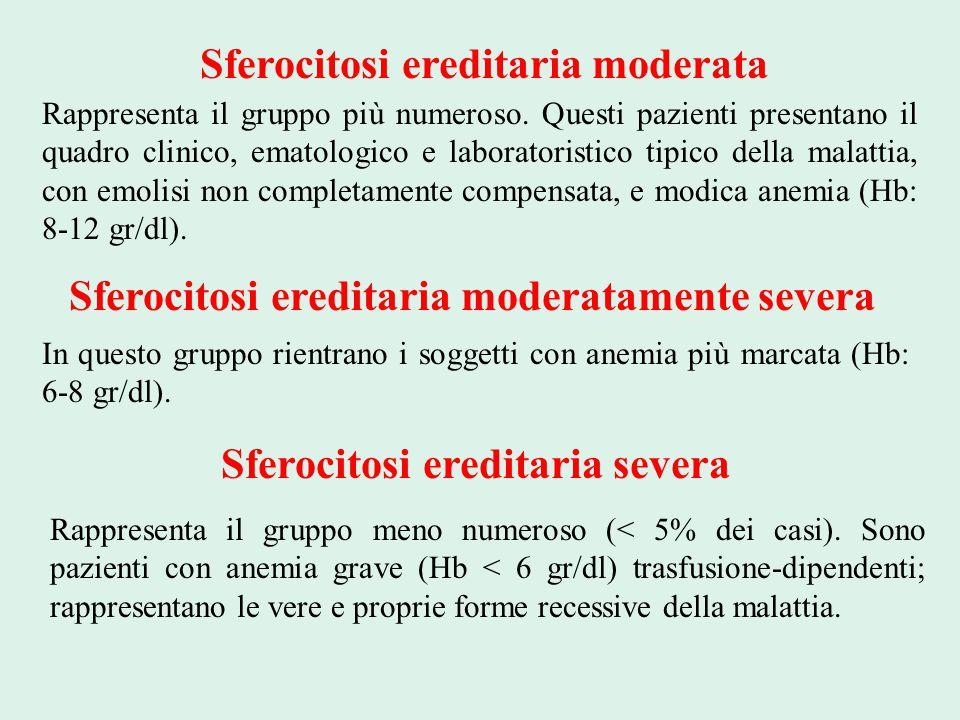Sferocitosi ereditaria moderata Rappresenta il gruppo più numeroso. Questi pazienti presentano il quadro clinico, ematologico e laboratoristico tipico