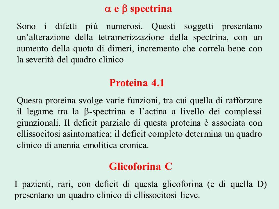  e  spectrina Sono i difetti più numerosi. Questi soggetti presentano un'alterazione della tetramerizzazione della spectrina, con un aumento della q
