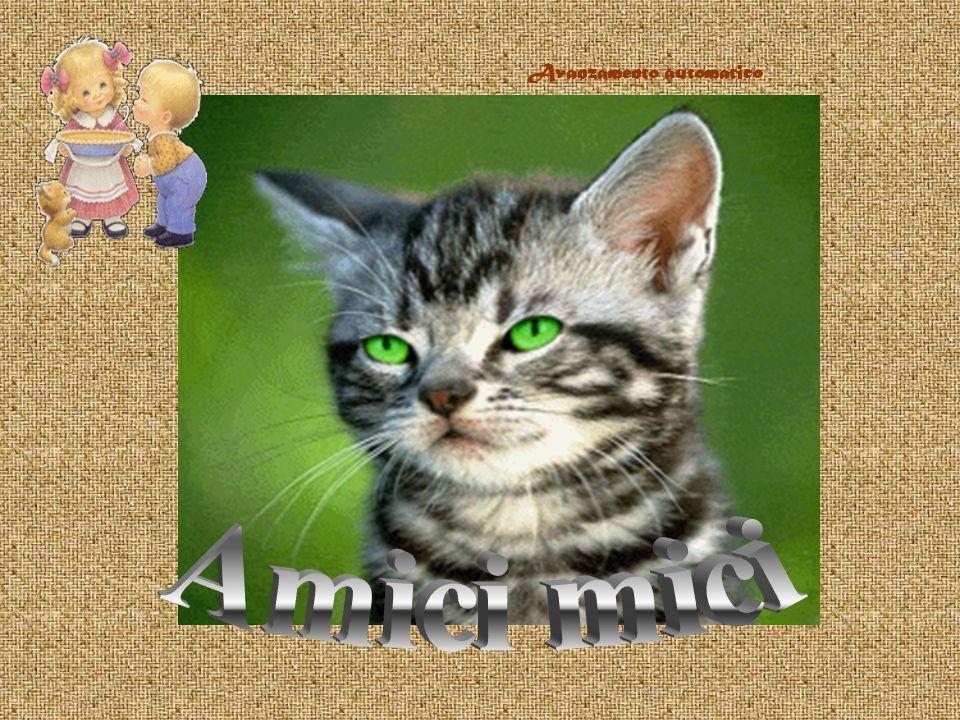 La maggiore osservazione che si può fare alla maggioranza dei gatti, è la loro insopportabile aria di superiorità.
