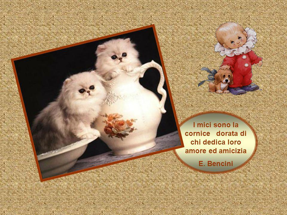 I mici sono la cornice dorata di chi dedica loro amore ed amicizia E. Bencini