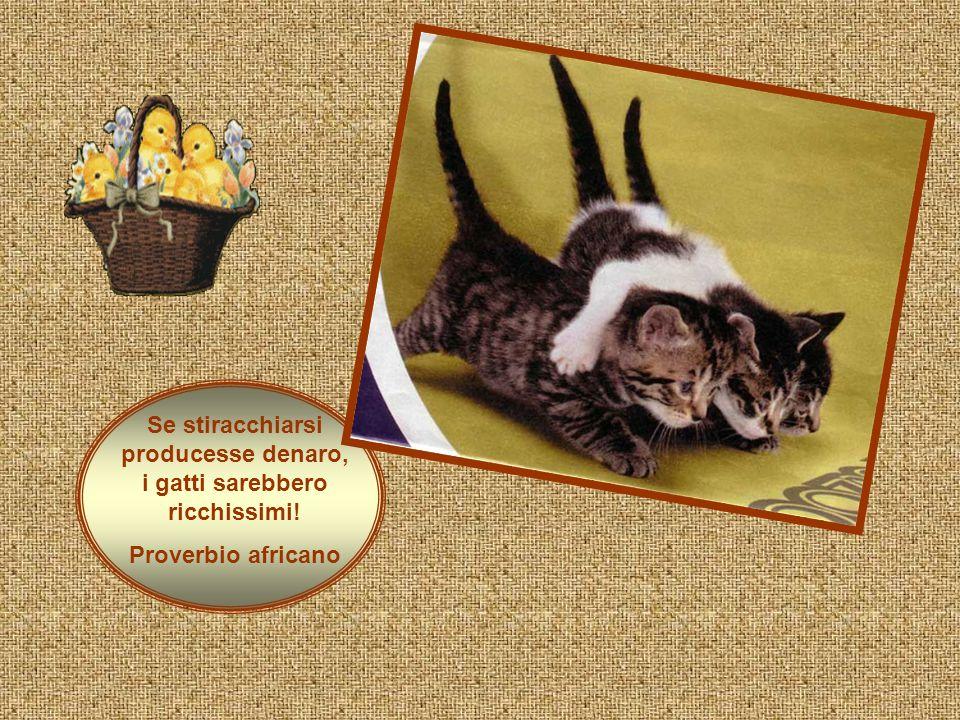 Se stiracchiarsi producesse denaro, i gatti sarebbero ricchissimi! Proverbio africano