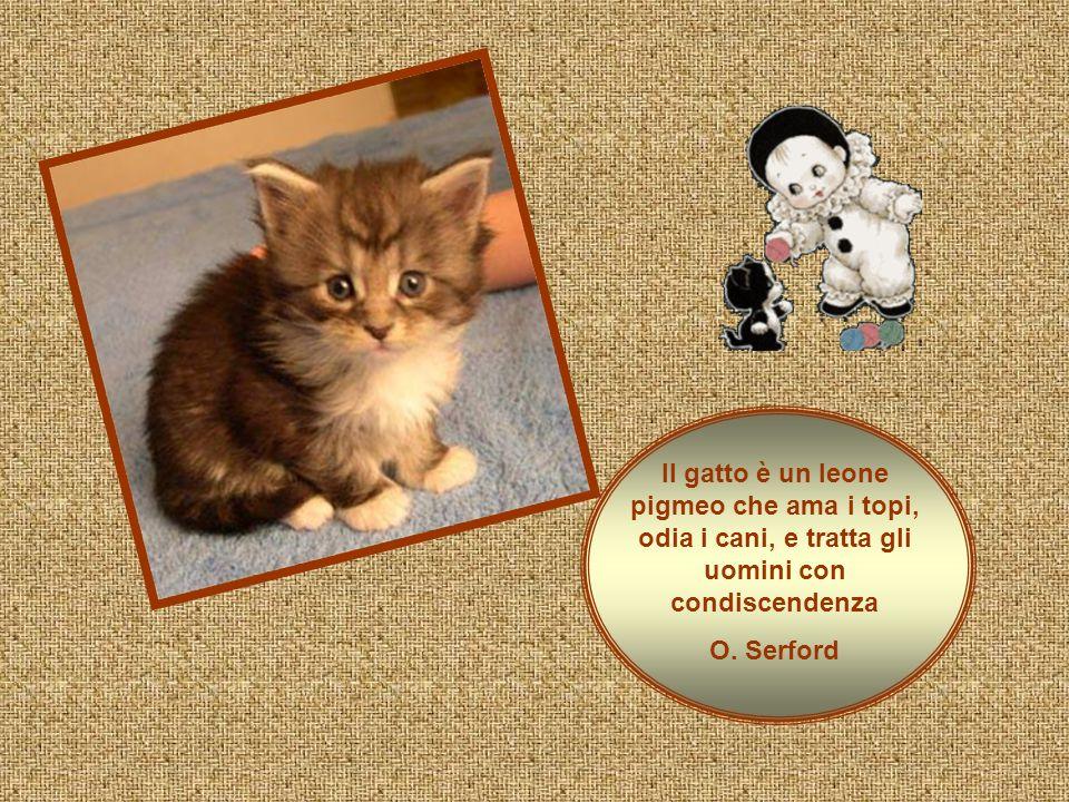 Il gatto è un leone pigmeo che ama i topi, odia i cani, e tratta gli uomini con condiscendenza O.
