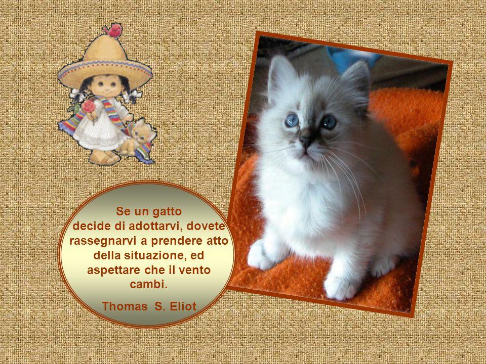 Se un gatto decide di adottarvi, dovete rassegnarvi a prendere atto della situazione, ed aspettare che il vento cambi.
