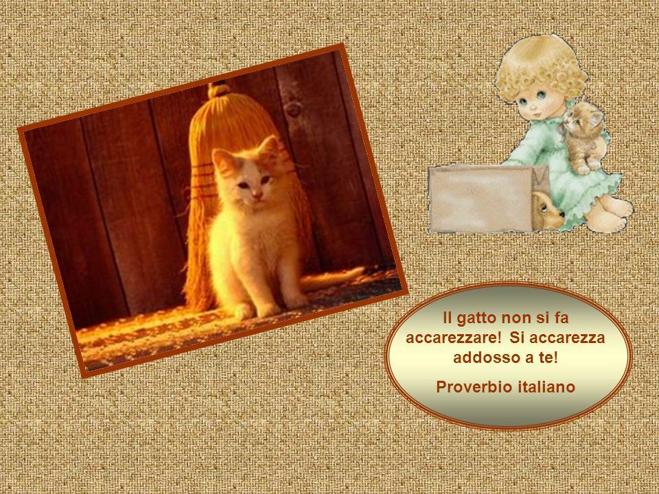 Il gatto non si fa accarezzare! Si accarezza addosso a te! Proverbio italiano