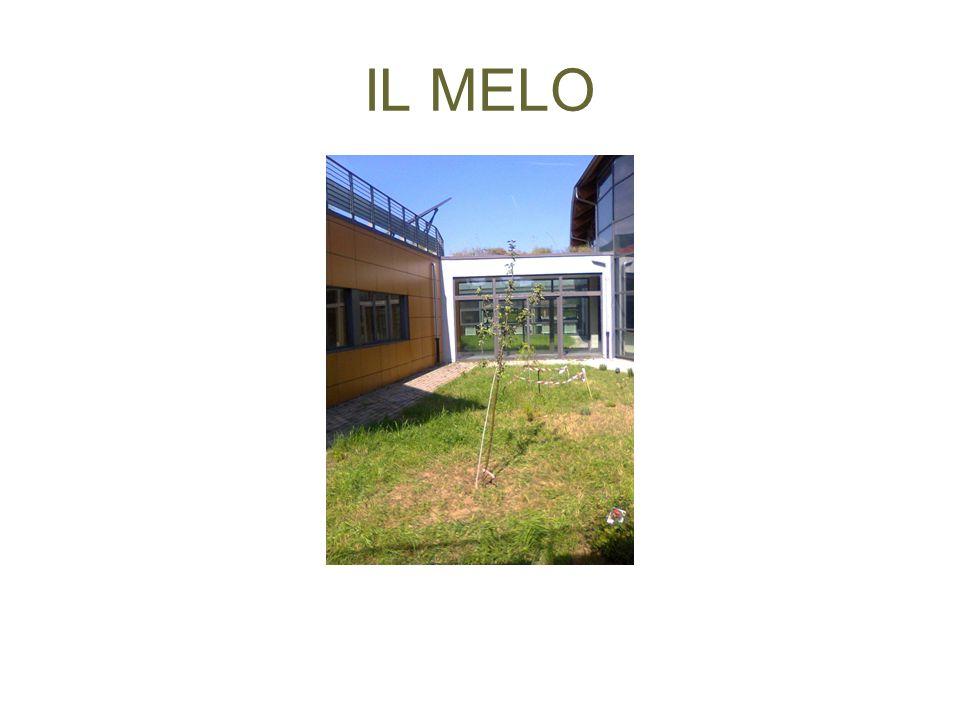 IL MELO