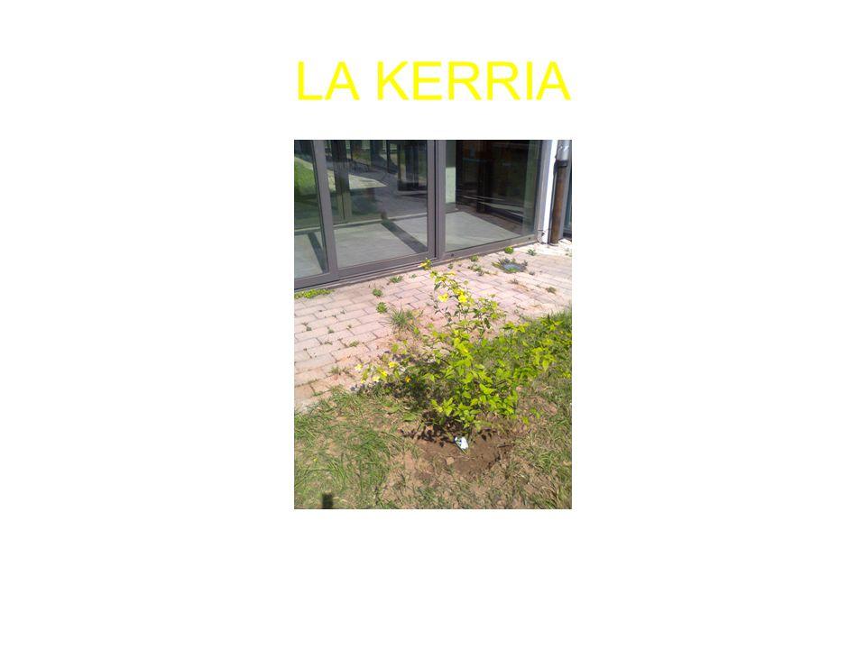 LA KERRIA