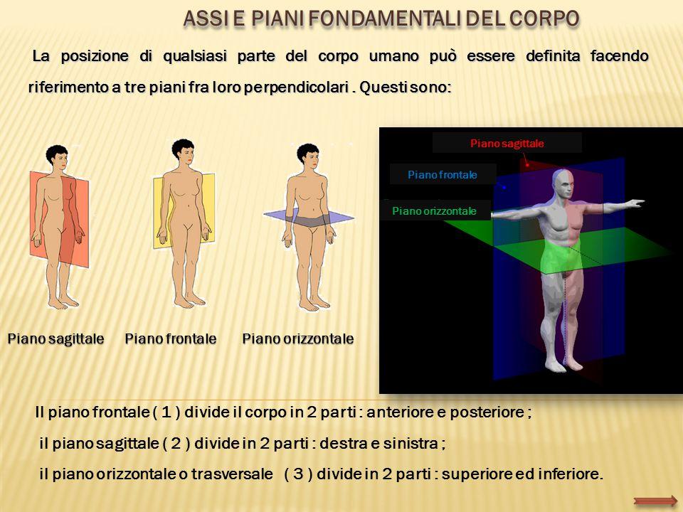 La posizione di qualsiasi parte del corpo umano può essere definita facendo riferimento a tre piani fra loro perpendicolari. Questi sono: La posizione