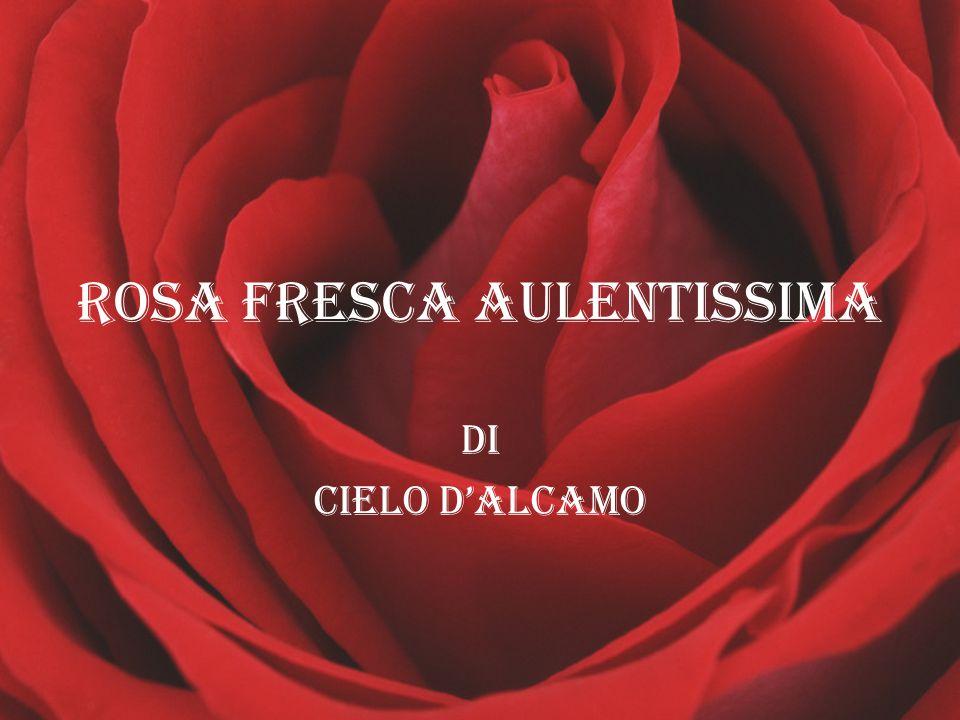 ROSA FRESCA AULENTISSIMA DI Cielo d'alcamo