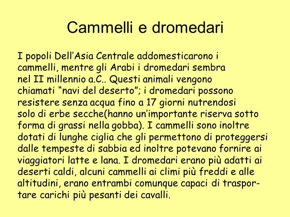 Cammelli e dromedari I popoli Dell'Asia Centrale addomesticarono i cammelli, mentre gli Arabi i dromedari sembra nel II millennio a.C.. Questi animali