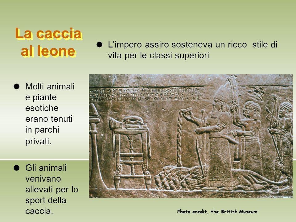 Un campo assiro L'esercito assiro era una macchina efficiente, organizzata e agguerrita.