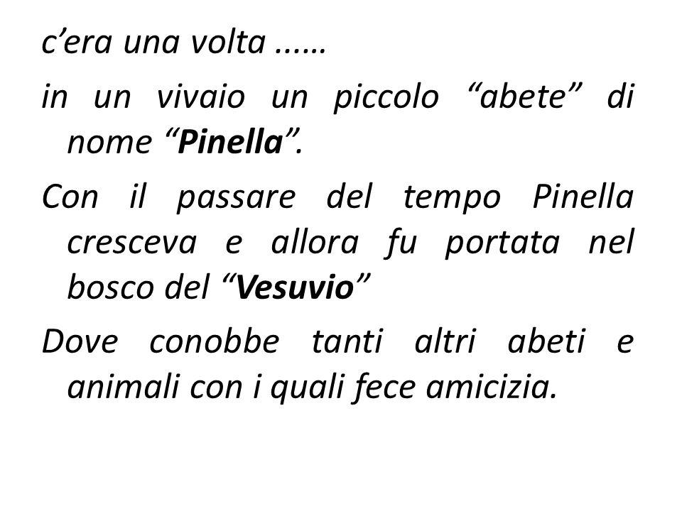 c'era una volta...… in un vivaio un piccolo abete di nome Pinella .